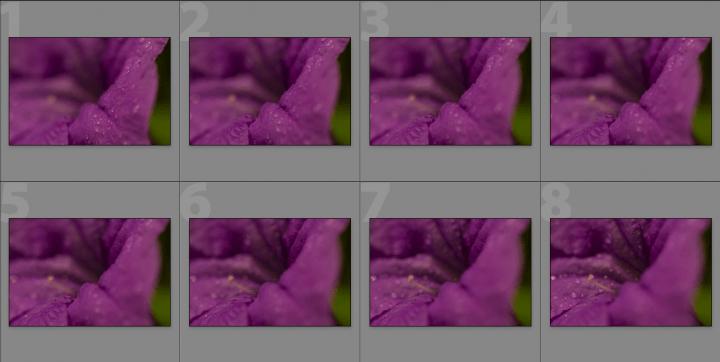Ecco un set di 8 foto, si può notare che il pistillo è in fuoco solo nelle ultime foto.