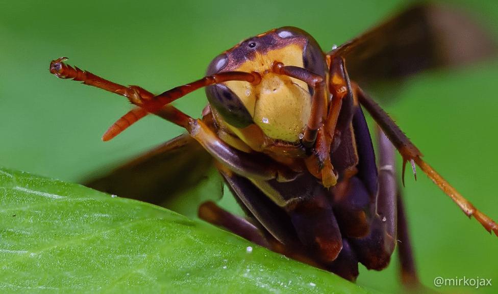 vespa macro